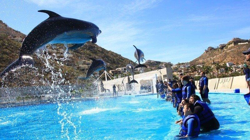 Resultado de imagen para Canadá prohíbe la captura y cautiverio de delfines y ballenas para fines de entretenimiento