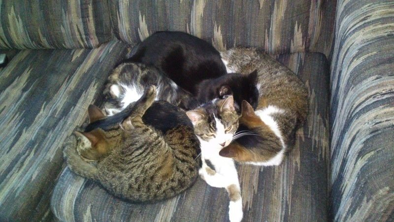 Petition · Their voice for cats-with love: End cat abuse and cruelty