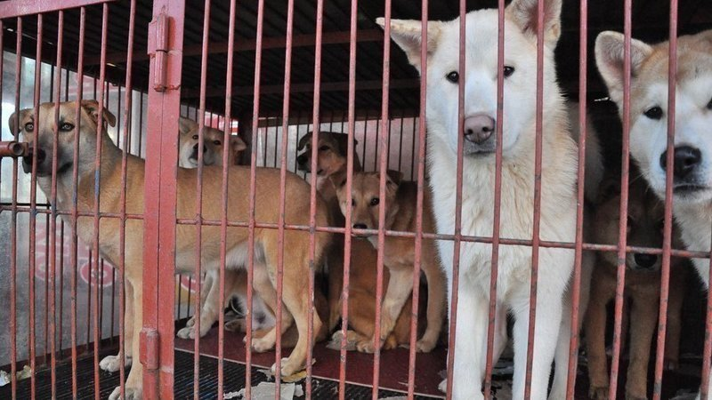 Petition · Plz sign! Demolish illegal dog slaughterhouse ... - photo#30