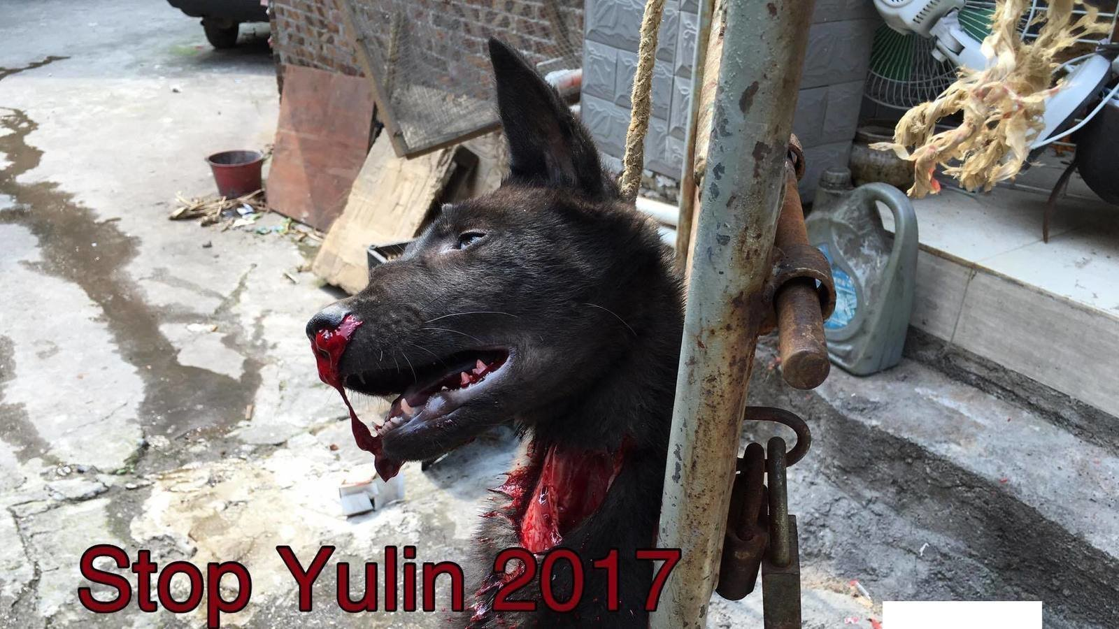 Petition · Mr. Chen Wu please END DOG MEAT in Guanxi ... - photo#30