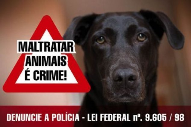 Resultado de imagem para cãmara aprova aumento de pena para maus tratos de animais