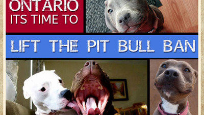 Petition · Time to lift the pit bull ban · Change org