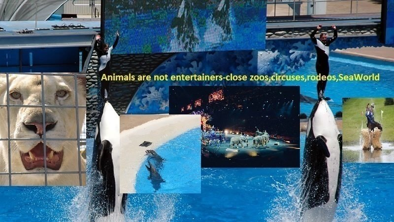 Incidents At Seaworld Parks: Petition · Animals Are Not Entertainers-close #Zoos