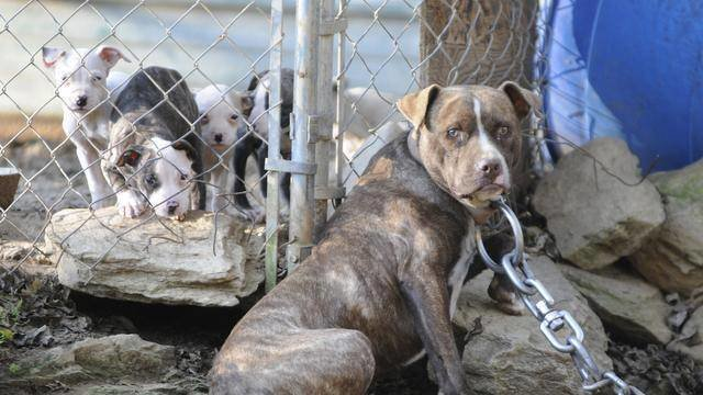 Petition Durham City Manager No More Chained Up Dogs In Durham