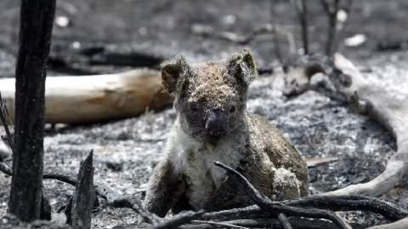 petition  u00b7 stop burning animals alive vic government