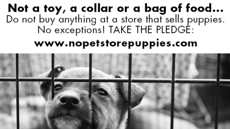 Petition · Stop the Sale of Puppies in Pet Stores