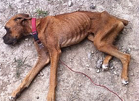 enforcing harsher animal abuse penalties The da is also calling for changes in the animal cruelty law, saying harsher penalties are needed and there should be changes in cruelty enforcement officer standards.