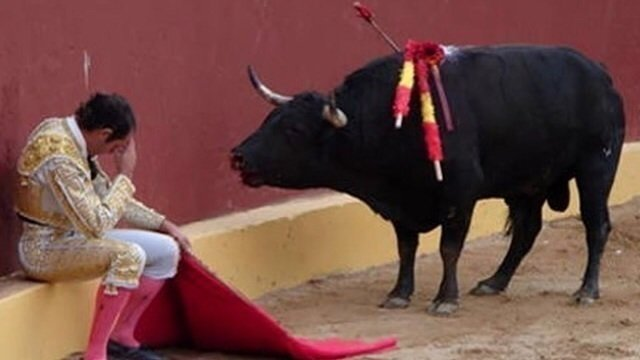 Image result for ban bullfighting