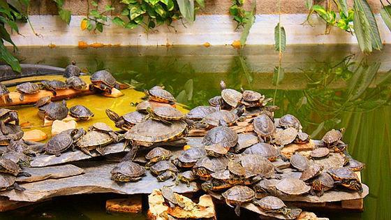 Resultado de imagen para estacion de atocha tortugas