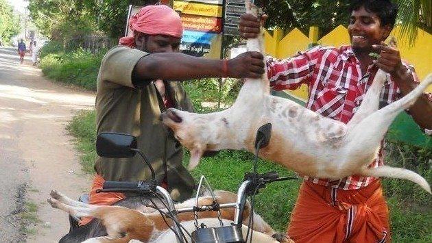 Cat Food Wholesale India